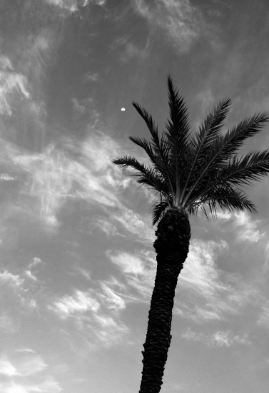 Moon over palm in the morning (© Image: all rights reserved, no permissions granted, copyrighted)