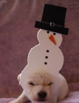"Puppy in snowman outfit ""Too cold"" (Blue Heron Farm)"