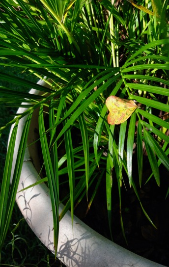Plant. Potted palm holding a bright autumn leaf. ( Image: all rights reserved, copyrighted, no permissions granted)