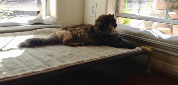Cat stretched out on raised mesh dog bed looking out window. (© image: all rights reserved, copyrighted, no permissions granted)