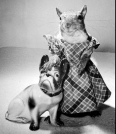 Squirrel in ddress with china dog (1944. Time, inc. Leen/Life mag/USPD. pub.date, artist life/Commons.wikimedia.org