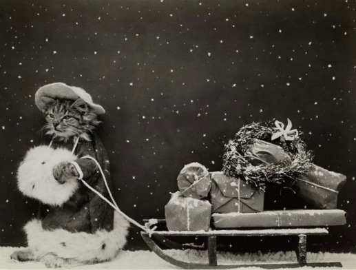 Christmas cat shopper pulling gifts on sled., 1914 postcard. NYPub.Lib (USPD. pub.date, artist life/Commons.wikimedia.org)