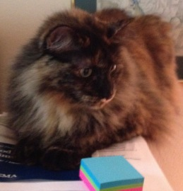 Cat on desk with post-its (© Image. All rights reserved, copyrighted, NO permissions granted)