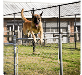 Dog. Police dog leaping over fence. HPD T-Rex (image from T-Rex's Twitter)