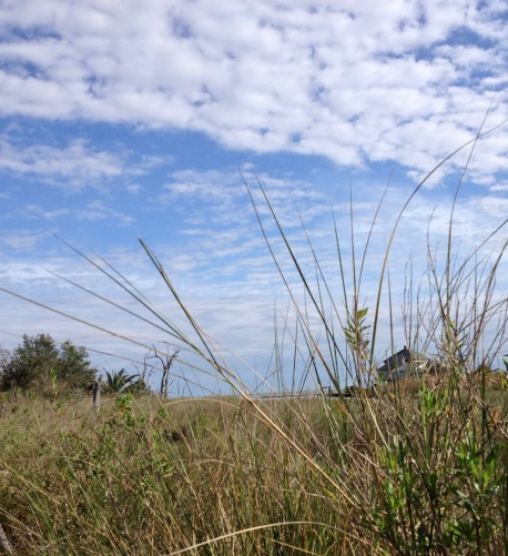 Marsh grasses of Pine Gully. (© image copyrighted, all rights reserved, no permissions granted )