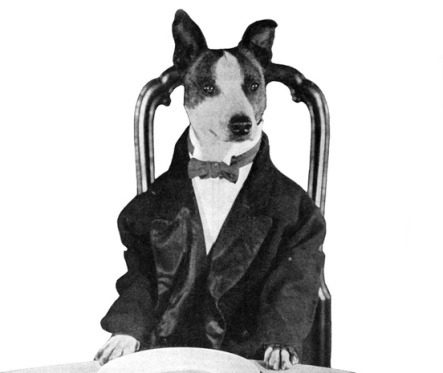 Dog dressed for dinner. (Brownie the dog film star, 1921. Century Film/Universal Px/Motion Picture News, 1021/USPD.pub.date, artist life/Commons.wikimedia.org)