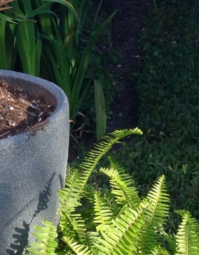 Small lizard sunning on pot (© image: all rights reserved, copyrighted, no permissions granted)