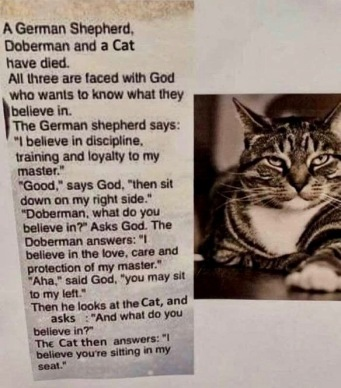 cat and funny cat joke (West TX newspaper clipping image)