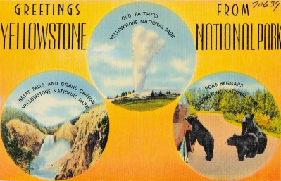 Postcard with bears, geysers, Yellowstone (TIchnor Bro./ USPD. pub.date, artist life/Commona.wikimedia.org