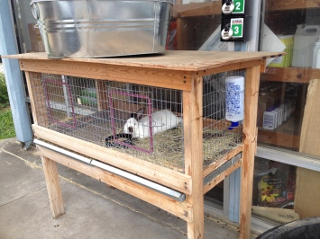 rabbit in cage (© image copyrighted, all rights reserved, no permissions granted )