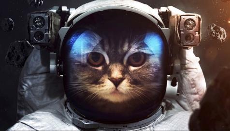 Cat looking out of space helmet (Cat in space suit. (Source: wallpaperscraft.com)