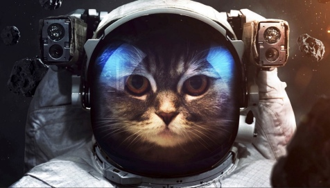 Cat looking out of space helmet (Cat in space suit. (Source: wallpaperscraft.com)
