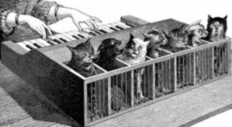 7 cats making Cat piano. 1883 (USPD: pub.date,artist life/Commons.wikimedia.org)