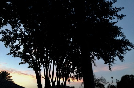 July sunset behind trees (© image: all rights reserved, copyrighted, NO permissions granted)