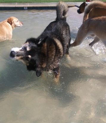"""Dogs in salt water pool. """"Shake it all about"""" (Image: copyrighted, all rights reserved, NO permissions granted)"""