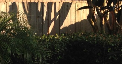 shadows of tree trunks on fence. (© image: copyrighted, all rights reserved, NO permissions granted