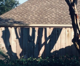 Shadows branching out across wooden fence. (© image : copyrighted, NO permissions granted, All rights reserved)