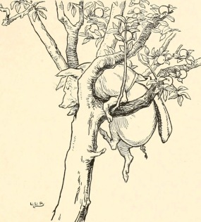 Pig stuck in tree. Leslie Brooke. 1905(USPD. pub.date, artist life/Gutenberg/Commons.wikimedia.org)