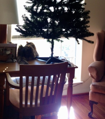 RC Cat on table looking out window from underneath Christmas tree (© image. Copyrighted. No permissions granted, ALL rights reserved)