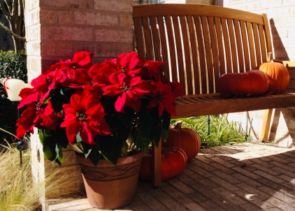 Pumpkins on porch with poinsettia.Still there. (© image. Copyrighted, No permissions granted. All rights reserved)
