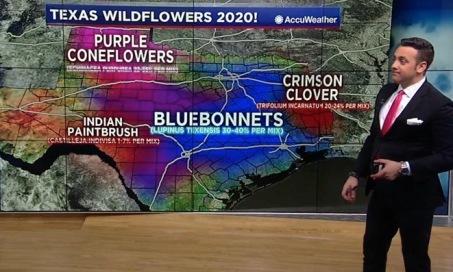 (Texas Map of wild flower blooms. screenshot, ABC 13 news)