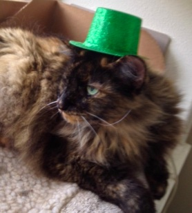 Cat in St Patrick's Day hat. (© image. Copyrighted, no permissions granted, All rights reserved)