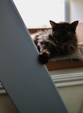Cat on window seat holding onto treadmill. (© image. Copyrighted, all rights reserved, No permissions granted)