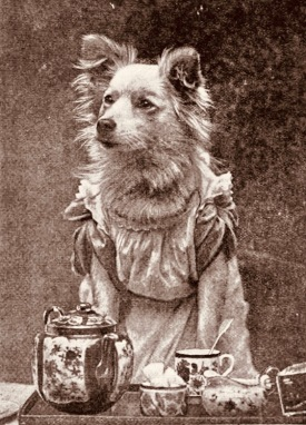 "Dog dressed for tea. 1895 Magazine shoot. ""Come Along, Tea-Time"" (USPD. pub,date, artist life/Commons.wikimedia.org)"