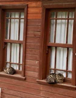 Cats sitting on window sill outdoors. (Jwslubbock/COmmons.wikimedia.org)