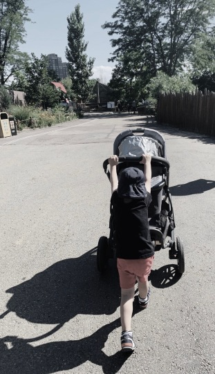 Boy pushing stroller. (© Image copyrighted. All rights reserved. No permissions granted)