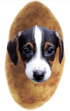 Dog face on potato (screenshot Potato Parcel )
