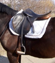 English saddle on brown horse. (Alex brollo/Commons.wikimedia.org)