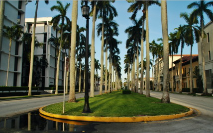 Palm Beach street scene with palm treed ( Image by qwsy qwesy/Commons.wikimedia.org)