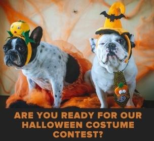 Dogs in Halloween costumes ( Kingwood animal hospital )