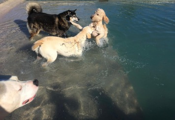 Dog pool party (© image, copyrighted, all rights reserved, no permissions granted.)