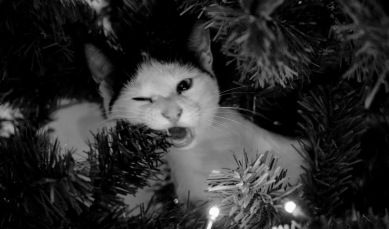 Cat in Christmas tree ( Image by Scott Wylie, UK/Commons.wikimedia.org)