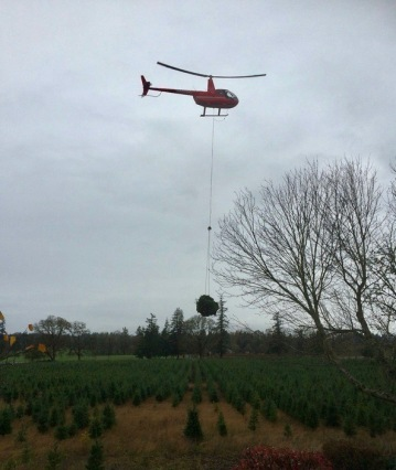 Helicopter lifting something heavy over Christmas tree farm (USPD/Commons.wikimedia.org)