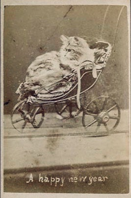 New Years Greeting. cat siting in pram. 1870's Harry Pointer's Brighton Cats (USPD. pub.date, artist life, reprod of PD art/Commons.wikimedia.org)