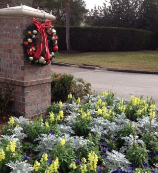 Colorful flowers and wreath at Christmas time (© image. Copyrighted, all rights reserved. No permissions granted)